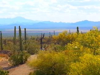 Arizona Sonoran Desert Museum vista