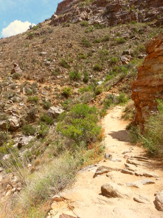 Sabino Canyon hiking trail.