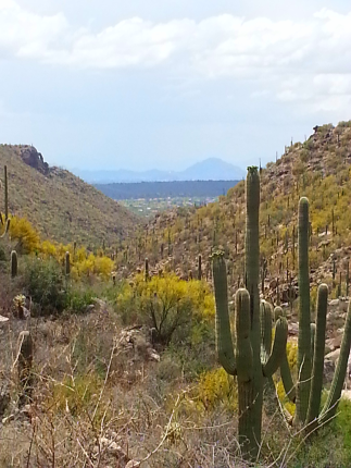 Sabino Canyon, Tucson, AZ