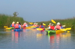 Colorful kayaks in the ACE Basin, SC.